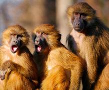 Что делать, если завидуют родственники – 5 советов