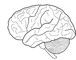 Картинка вся проблема в мозге